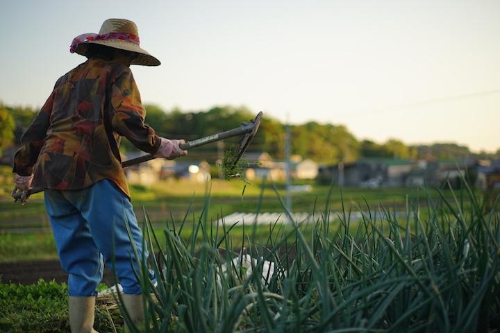 農業リゾートバイトの求人はあまりない
