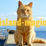 【island-magic】離島リゾートバイトの恋愛・ワンチャン事情解説