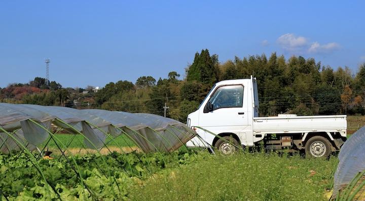 【農業バイト体験談】かぼちゃの収穫!5・6個ずつ袋に入れる…
