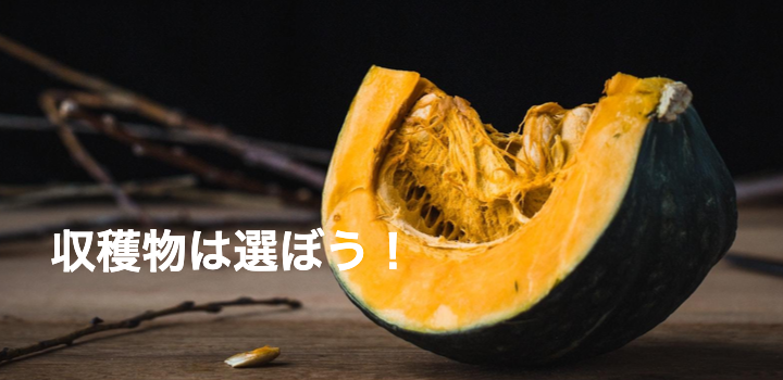辛すぎる農業バイト体験談!まさかの、かぼちゃの収穫でした!